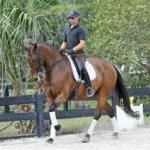leandro for sale dresage horse Prix St Georegs
