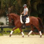 Chestnut gelding for sale